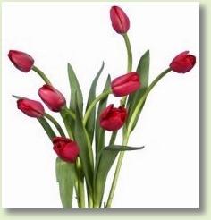 ... felicitari felicitari 1 martie felicitari 1 martie ghiocei mesaje
